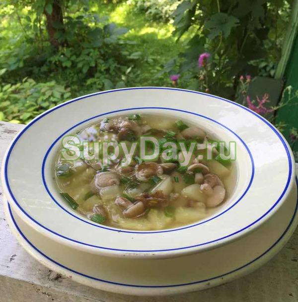 Суп из маслят – классический